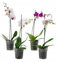 Orchid Class with Beth Davis, Waldor Orchids