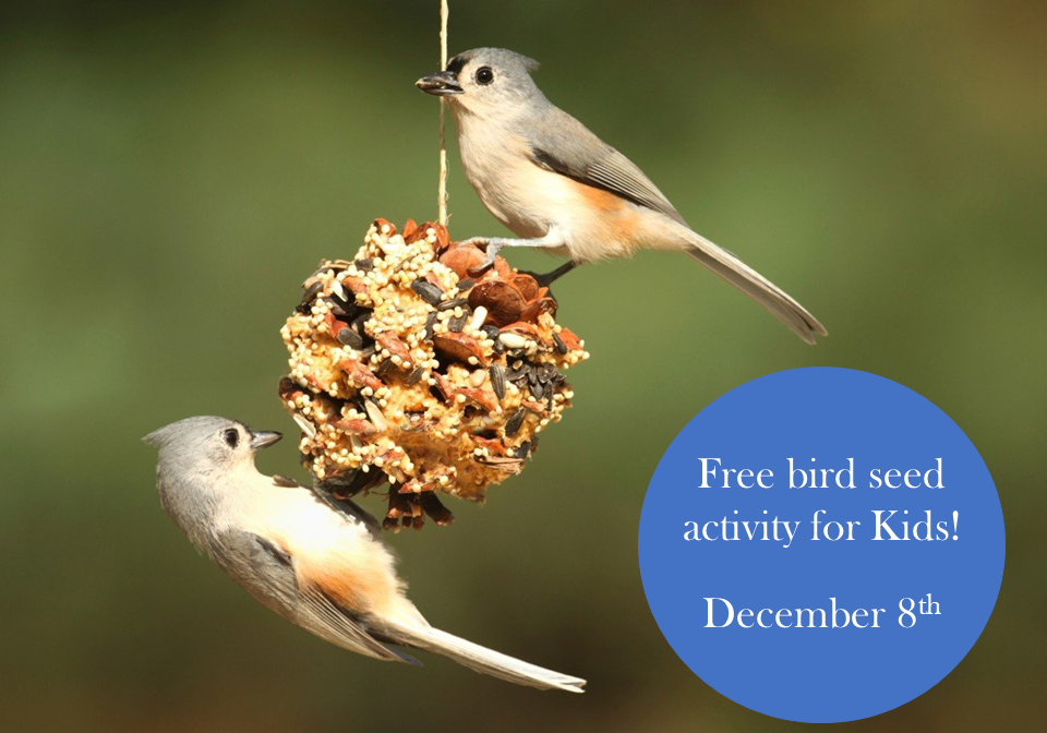 Birdseed-Activity-for-Kids Holly Days - East Coast Garden Center