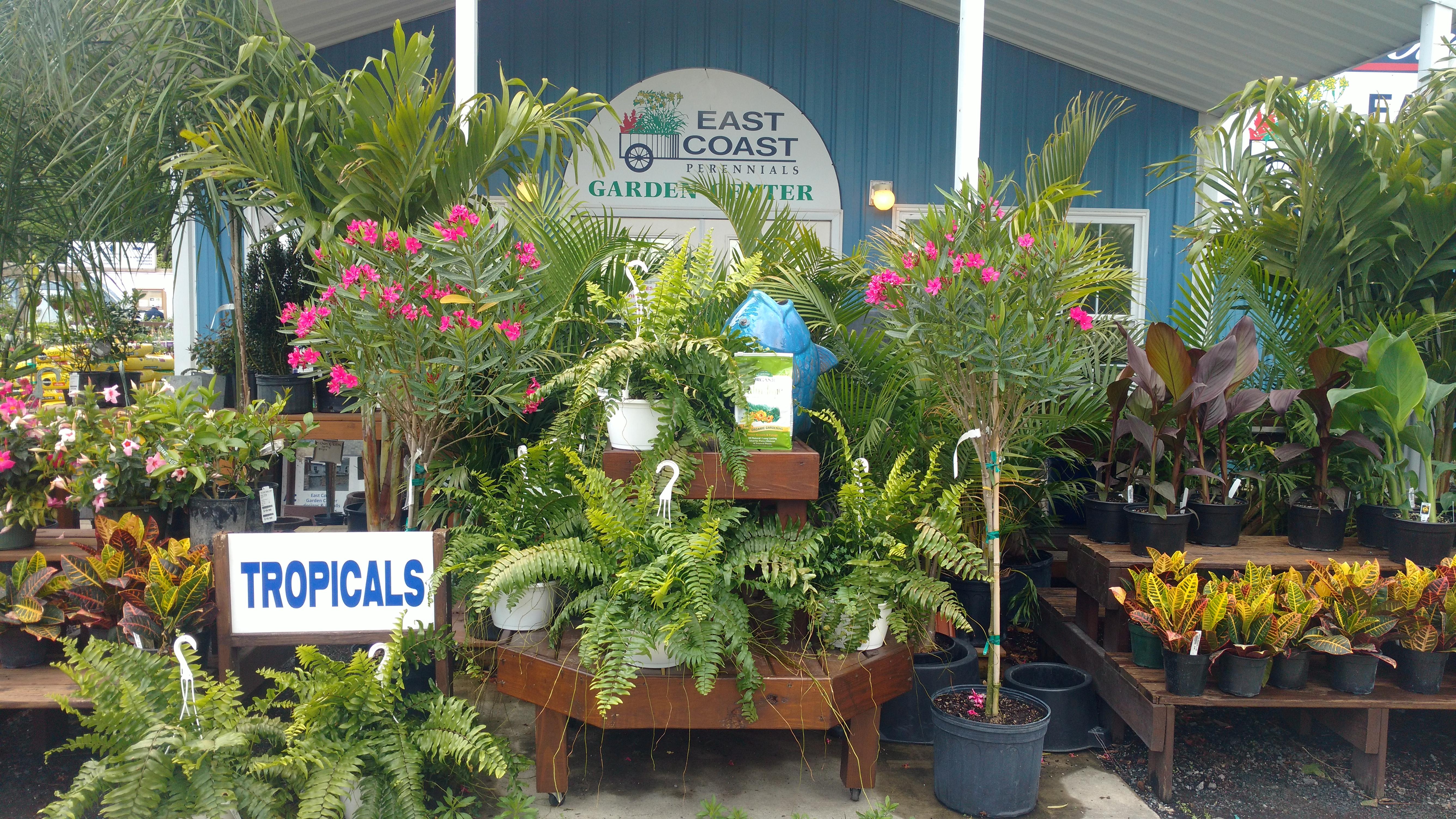 Tropical Plant Workshop on 5/25