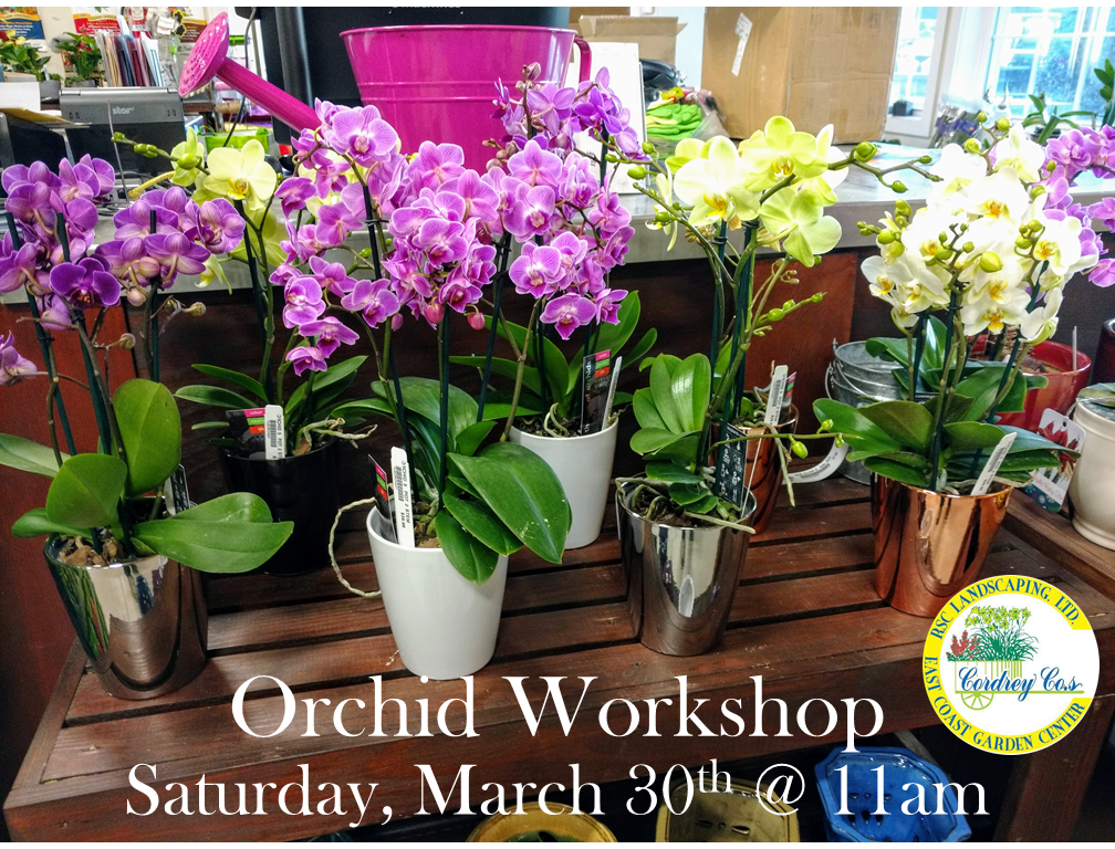 OrchidWorkshop3.30.19 Orchid Workshop - East Coast Garden Center