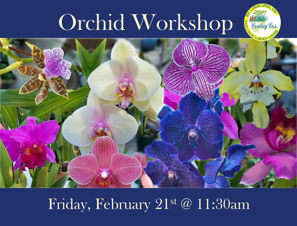 Orchid Workshop Feb. 21st @ 11:30am