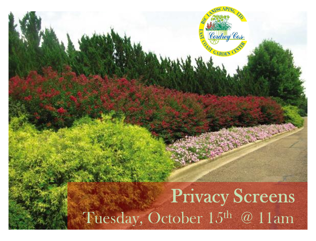 Privacy Screens - Oct 15th