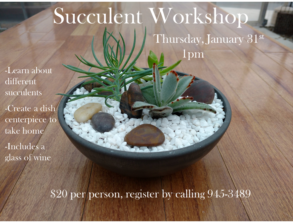 Succulent-Workshop Succulent Workshop - East Coast Garden Center