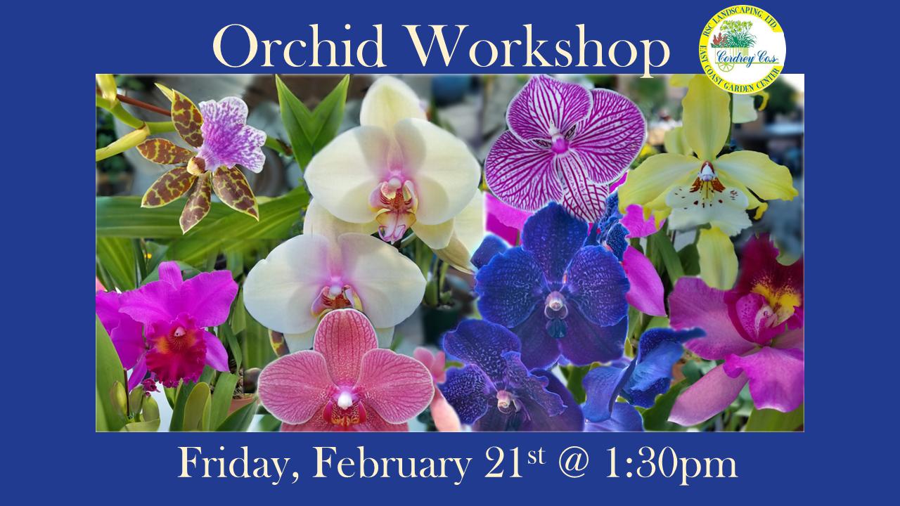 Orchid Workshop Feb 21st @ 1:30pm