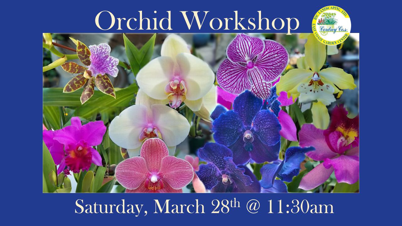 Orchid Workshop Mar. 28th @ 11:30am